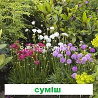 Армерія Армада (колір на вибір) 100 шт.