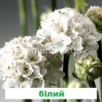 Армерія Армада (біла) 100 шт.