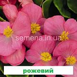 Бегонія Спрінт Плюс F1 (колір на вибір) 1000 шт., фото 5
