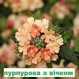 Вербена Обсешн Каскад F1 (колір на вибір) 50 шт., фото 2