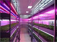 Фитолента для растений (освещение растений)