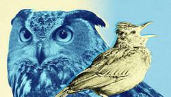Определитесь, кто вы: Жаворонок, Сова или Голубь? ТЕСТ