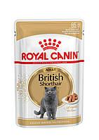 Royal Canin British Shorthair (кусочки в соусе)  85г*12шт-паучи для котов