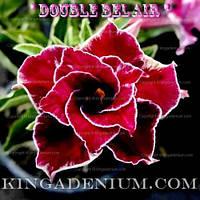 Адениум семена Double Bel Air