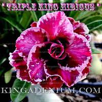 Адениум семена Triple King Hibicus