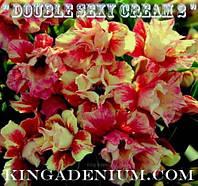 Адениум семена  Double Sexy Cream 2