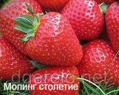 Клубника Моллинг столетие (ультраранний) Новинка