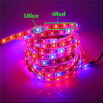 Фито лента для растений 4red+1blue SMD 5050  300Led 60шт/м  12в  IP20 5м, фото 3