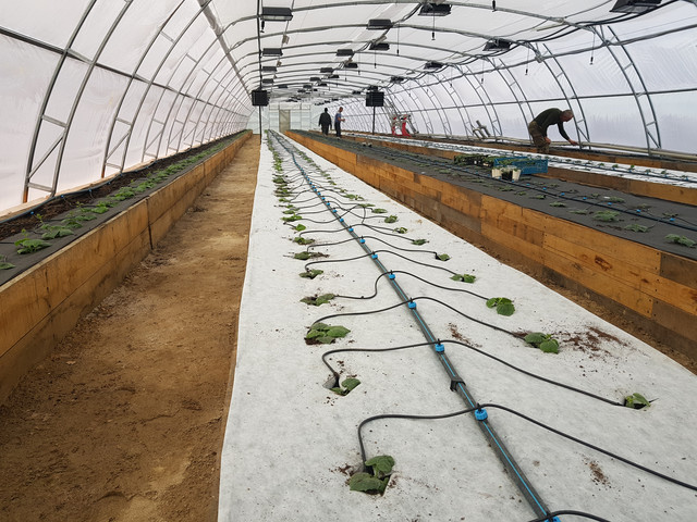 строительство  фермерских теплиц