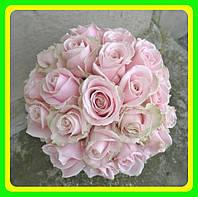 Роза чайно-гибридная Пинк Аваланж саженцы / цветы