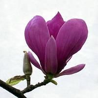 Семена редких,  экзотических красивоцветущих растений