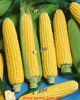 Семена кукурузы Аранка F1 500 грамм Semo