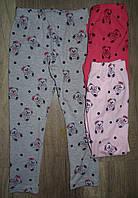 Лосины для девочек оптом,S&D,1-5 лет., арт.CH-3906, фото 1