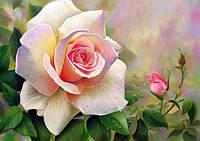 Алмазная вышивка роза 20х25 см, полная выкладка, квадратные стразы