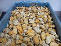 Мидии варено мороженые без ракушки 200-300