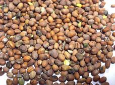 Семена дайкон микрозелень