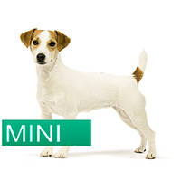 Royal Canin MINI (4-10 кг)