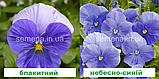 Віола Карма F1 (колір на вибір) 100 шт., фото 6