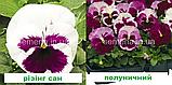 Віола Карма F1 (колір на вибір) 100 шт., фото 4
