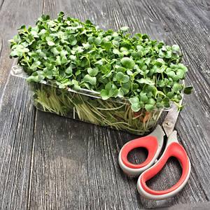 Микрозелень резанная