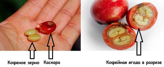 Каскара (Cascara), чай из кофейных ягод
