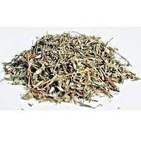 Курильский чай (лапчатка кустарниковая)