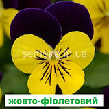 Віола Сорбет F1 (колір на вибір) 100 шт., фото 4