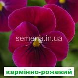Віола Сорбет F1 (колір на вибір) 100 шт., фото 3