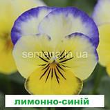Віола Сорбет F1 (колір на вибір) 100 шт., фото 2