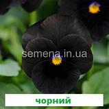 Віола Сорбет F1 (колір на вибір) 100 шт., фото 5