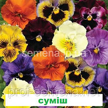 Віола Фрізлі Сізлі F1 (колір на вибір) 100 шт.