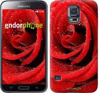 """Чехол на Samsung Galaxy S5 g900h Красная роза """"529c-24-5114"""""""