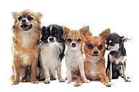 Brit care корм для собак мелких пород