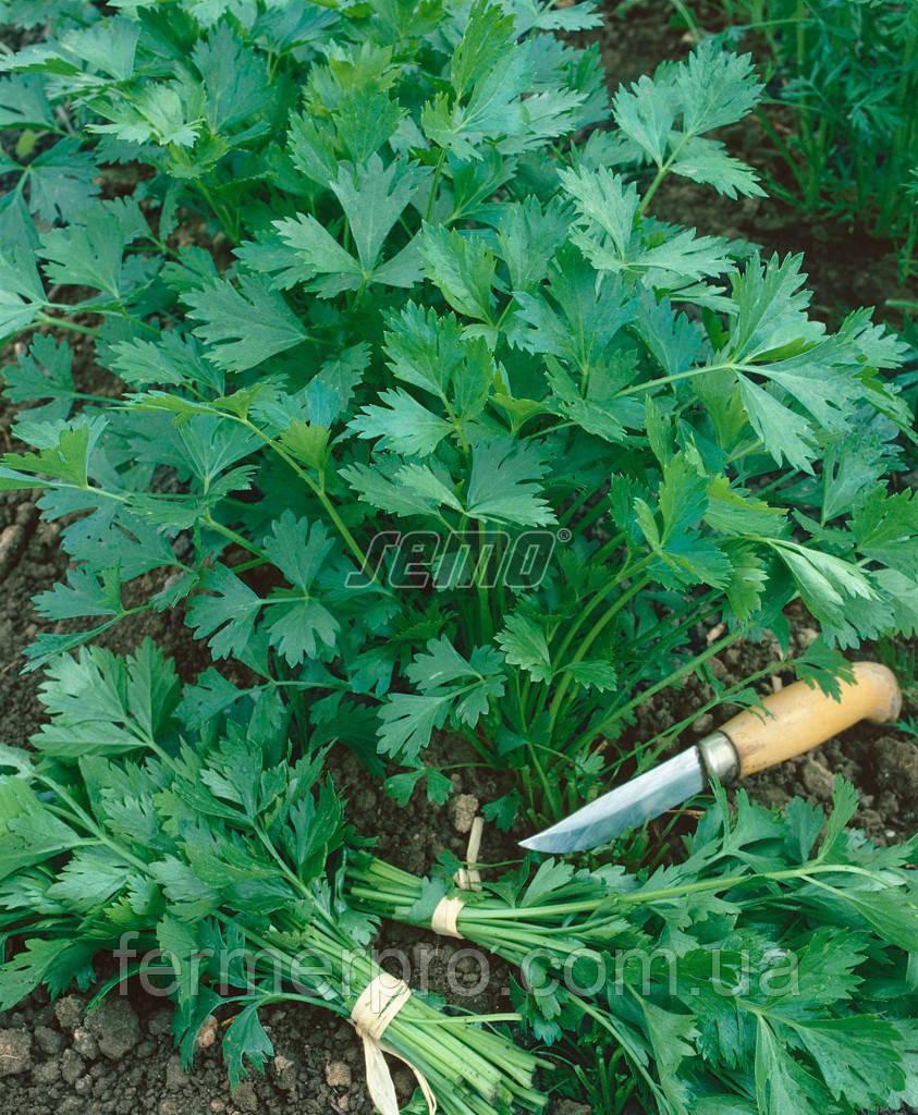 Семена петрушки Гиганте де Италия 500 грамм SEMO