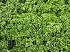 Семена петрушки Кадерава 1 кг SEMO