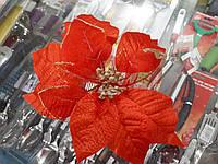 Рождественник (Пуансетия) красная с золотом