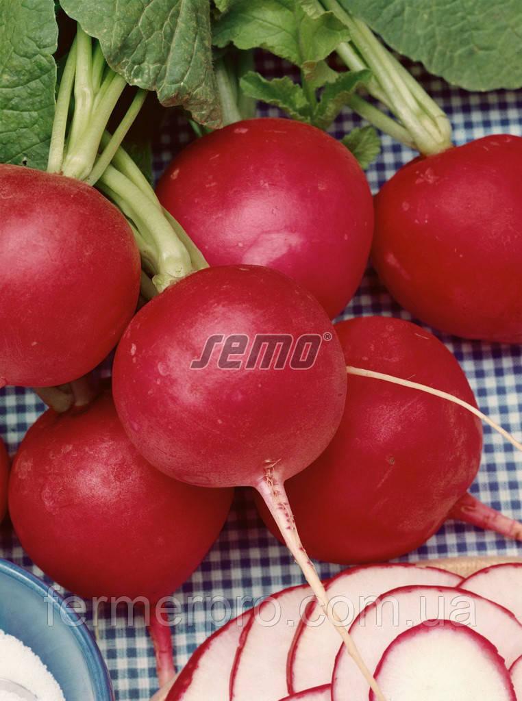 Семена редиса Кварта (Kvarta) 1кг  Semo