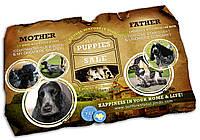 Дизайн презентации щенков питомника собак