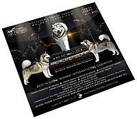 Дизайн презентации (рекламного постера) собаки / питомника