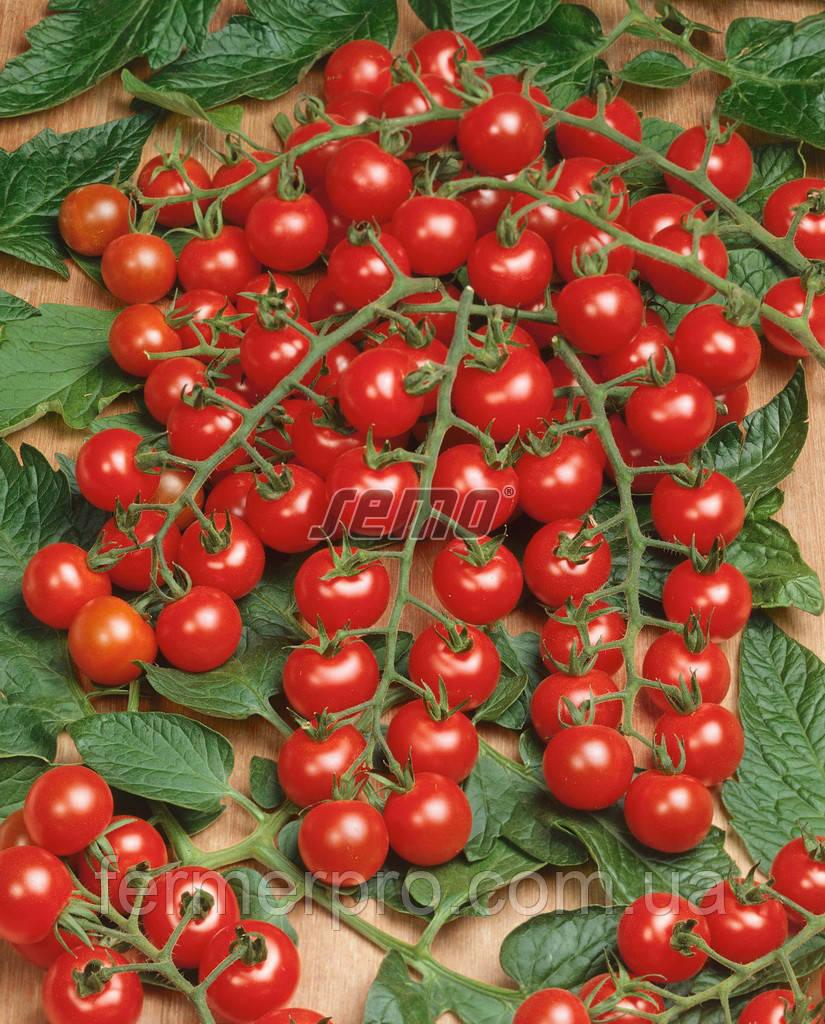 Семена томата Мини 1000 семян SEMO