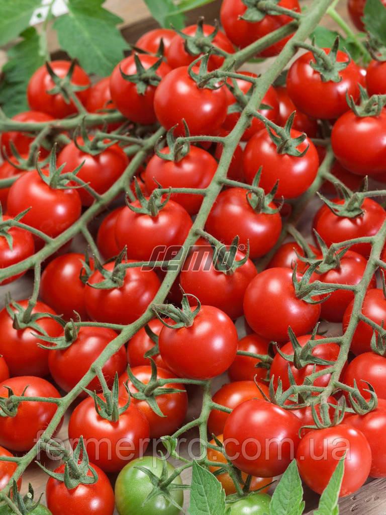 Семена томата Биби 1000 семян SEMO