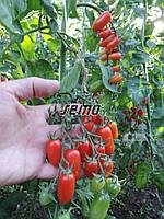 Семена томата Валдо 1000 семян SEMO