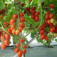 Семена Томат Намиб F1сливка 10шт