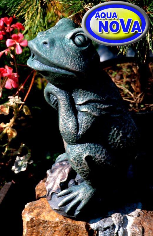 Сидить жаба