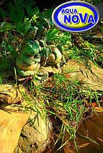 Пара жаб біля ставка
