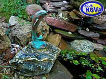 Дельфін на камені