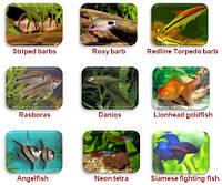 Примеры разведения некоторых видов рыб