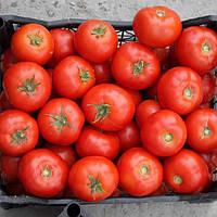 Семена томата Садин F1 (500 сем.)