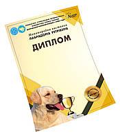 Дизайн и печать дипломов для выставки собак