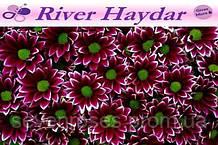 Хр-ма T Haydar